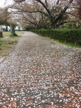 雨あがりの散歩
