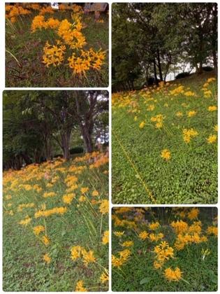 秋の花~と言えば